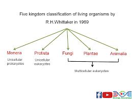 Five Kingdom Classification Chart Biological Classification Biological Classification Class