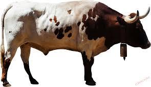 картина с быком картина телега с красно белым быком винсента ван гога