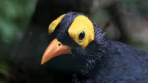 Vogelpark walsrode anfahrt