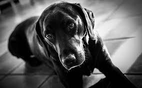 無料壁紙モノクロで撮影された犬の可愛いくてオシャレな写真画像まとめ