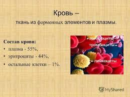 Презентация на тему Контрольная работа по предмету Физиология  Состав крови плазма 55% эритроциты 44% остальные клетки 1%