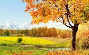 Beautiful Tree HD Wallpaper Yellow ...