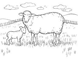 Small Picture Sheep Coloring Pages 9 Coloring