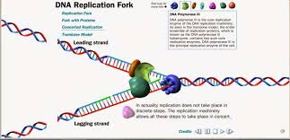 High School Learning Technologies A 7162101366466 Dna Replication