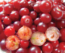 berry | Definition, Types, & Examples | Britannica