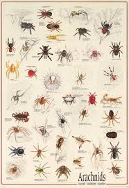 Spiders Arachnids Insect Poster 27x39 Types Of Spiders