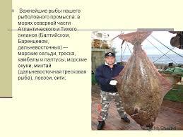 Презентация на тему Промысловые рыбы Презентацию составила  15 Важнейшие рыбы