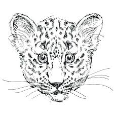 Snow Leopard Coloring Pages I5732 Snow Leopard Coloring Pages