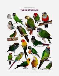 Pin On Birdies