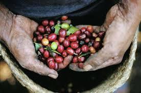 Кофеварки и кофемашины для дома и офиса от De'Longhi ...
