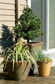 Small Picture 99 best Gardening images on Pinterest Garden ideas Plants and