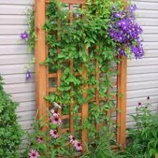 Download Trellis Designs Climbing Plants  Solidaria GardenClimbing Plant Trellis
