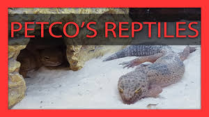 petco animals reptiles. Beautiful Reptiles Why You Should NOT Buy Reptiles From Petco On Animals S
