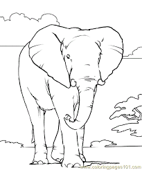 Small Picture African elephant Coloring Page Free Elephant Coloring Pages