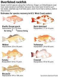California Rockfish Chart 4 The West Coast Rockfish Moratorium