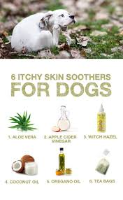 6 Itchy Skin Soothers for Dogs | Dogs - Medicines | Pinterest | Dogs ...