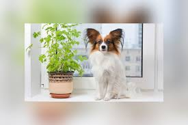 house plants safe for pets