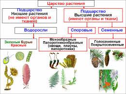 биология доклад по теме растения