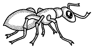Small Picture Download free printable Ant coloring page Preschool Crafts