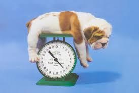Olde English Bulldogge Puppy Weight Chart Bulldog Weight Baggy Bulldogs