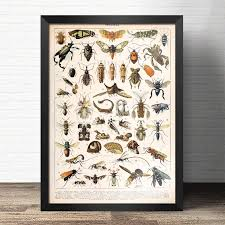 Us 6 79 30 Off Cosy Moment Botanical Animals Educational Prints Mushrooms Champignons Identification Reference Chart Poster Wall Decor In Painting
