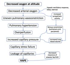 High Altitude Pulmonary Edema Wikipedia