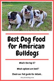 Best Dog Food For American Bulldogs Perfect Choices That
