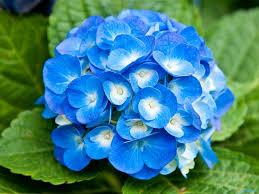 Light Blue Flower Names Blue Flowers Wallpaper 1600x1200 39958