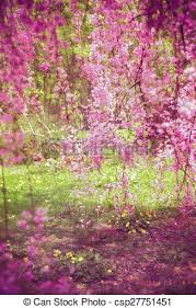 Cherry Blossom Backdrop Cherry Blossom Backdrop