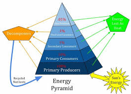 Create Flow Charts That Show Four Different Food Chains Energy Pyramid Definition Of Ecological Pyramid Biology