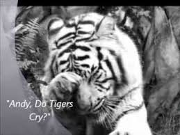 best tears of a tiger images a tiger tigers and student made book trailer for tears of a tiger by sharon draper