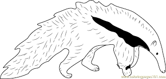 Small Picture Young Giant Anteater White Black Coloring Page Free Anteater