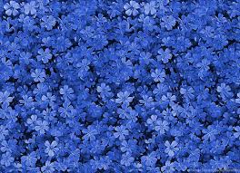 blue flowers background tumblr.  Background 780x564 On Blue Flowers Background Tumblr