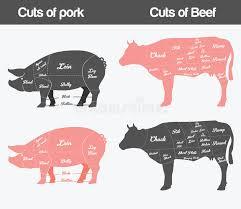 Hog Meat Cuts Chart Pork Meat Cuts Scheme Stock Vector Illustration Of Plan