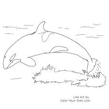Small Picture Wildlife Orca Coloring Page