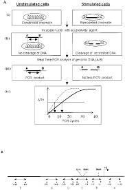 A Schematic Representation Of The Chart Pcr Assay A