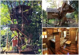 Wild Planet Adventures  Thailand  Laos Gibbon Experience Treehouse In Thailand