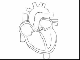 Small Picture Astounding human heart coloring page with anatomy coloring pages
