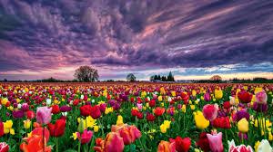 ... Flower Flowerrs Nature Landscape Wallpaper 2560x1440 682730