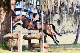 Merle-Smith Sporthorses - Home | Facebook