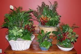 Small Picture Brilliant 10 Dish Gardens Designs Inspiration Of Best 20 Dish