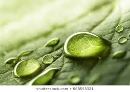 Nature Images, Pictures, Photos - Nature Photographs | Shutterstock
