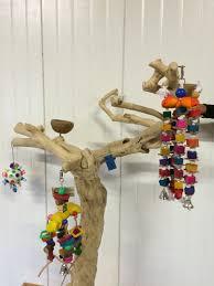 Image result for L'arbre de Java : le perchoir idéal pour votre perroquet