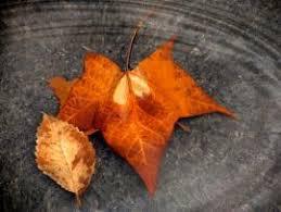 Autumn Leaves Backgrounds Presnetation Ppt Backgrounds Templates