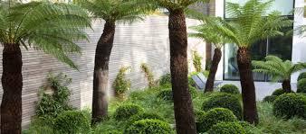 Tom Stuart-Smith Garden with Palm Trees