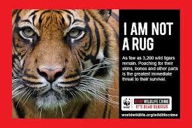 animal cruelty ads. Delighful Cruelty Stop Wildlife Crime Throughout Animal Cruelty Ads I