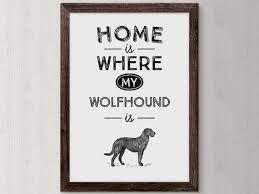 irish wolfhound wolfhound dog dog owner