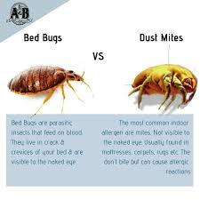 26+ Mites In Bed  Images