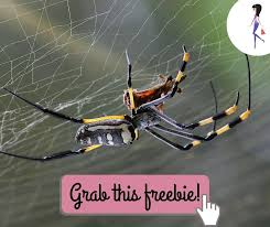 Free Spider Identification Chart Free Spider Identification Chart Catchyfreebies