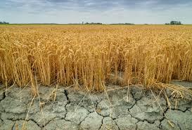 Meteorologii au emis un nou Cod galben în toată țara. Seceta hidrologică se va menține și săptămâna viitoare | ZUGO